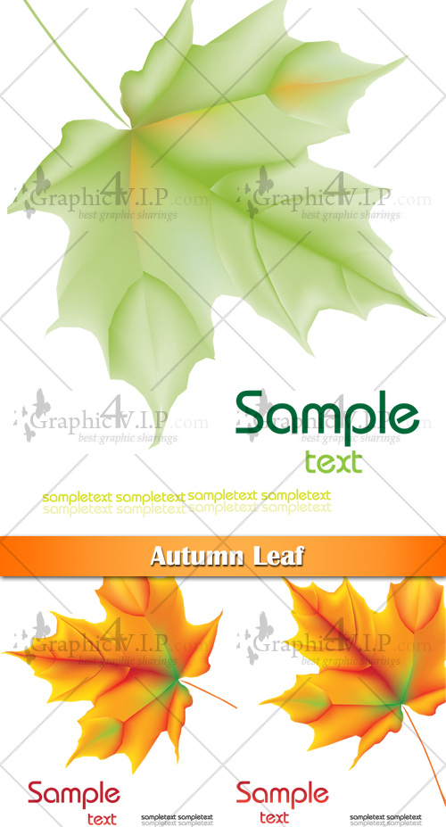 Autumn Leaf - Stock Vectors