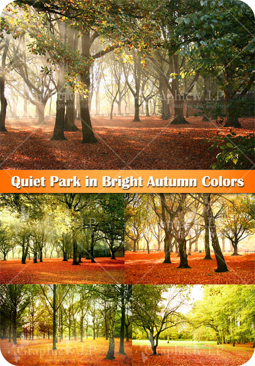 Quiet Park in Bright Autumn Colors - Stock Photos