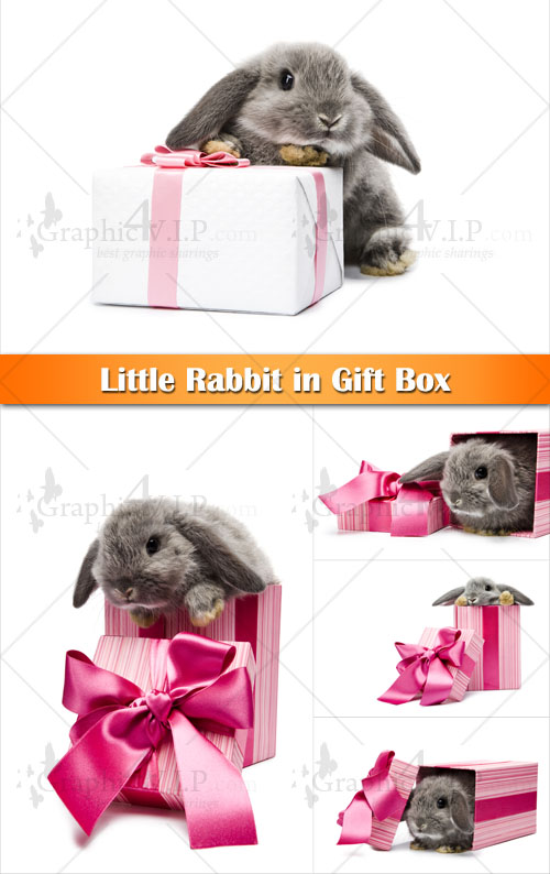 Little Rabbit in Gift Box - Stock Photos