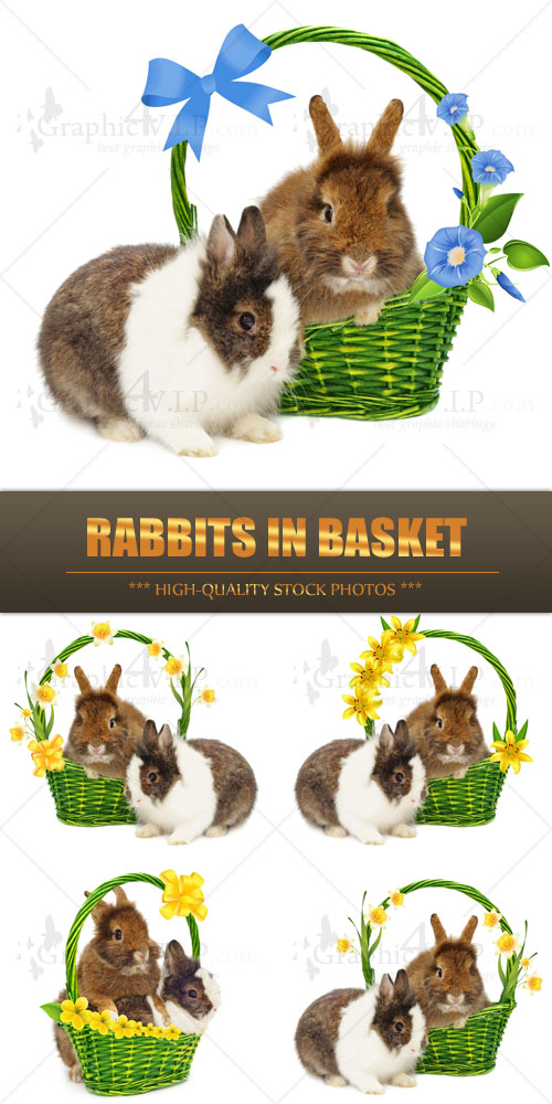 Rabbits in Basket - Stock Photos