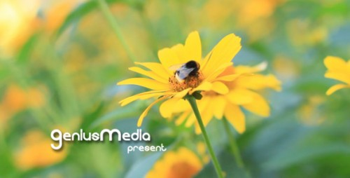 Photo Gallery on a Flower Holiday - After Effects Project (Videohive)