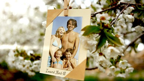 Photos Hanging in an Orchard - After Effects Project (Videohive)