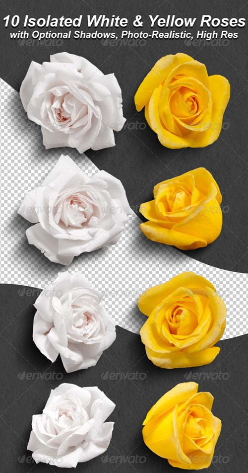 GraphicRiver 10 Photo-Realistic Isolated White and Yellow Roses