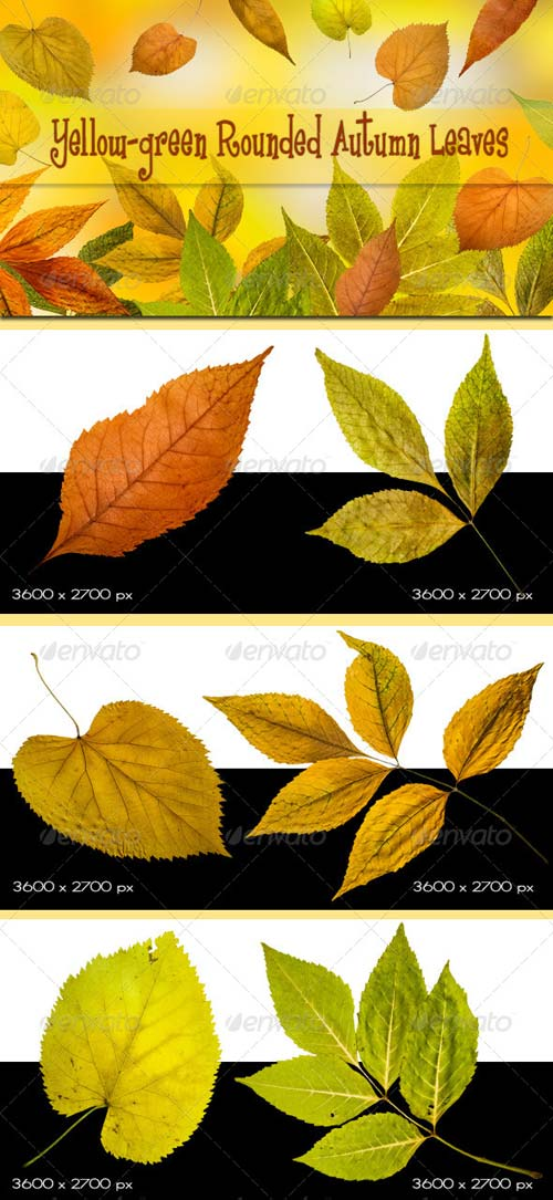 GraphicRiver Yellow-green Rounded Autumn Leaves